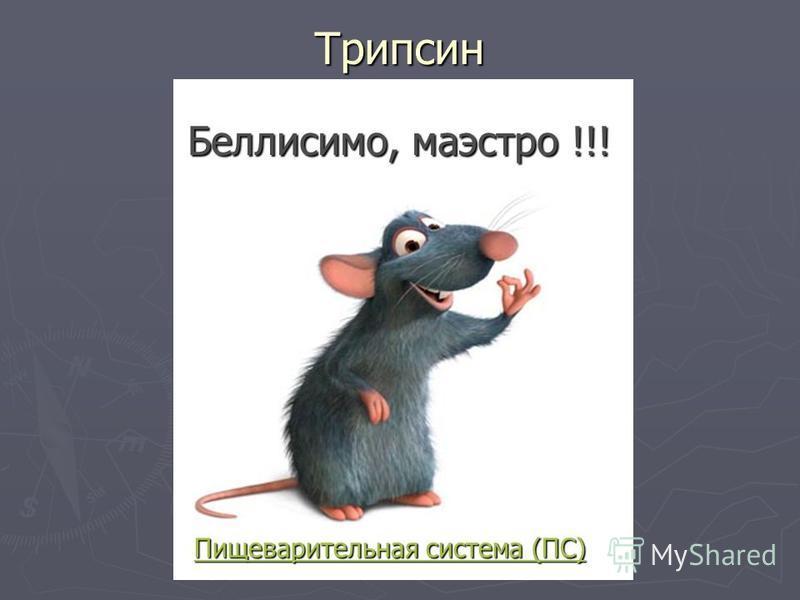 Трипсин Пищеварительная система (ПС) Пищеварительная система (ПС) Беллисимо, маэстро !!!