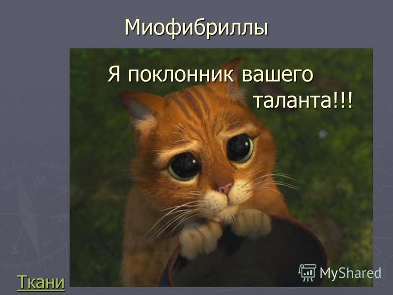Миофибриллы Ткани Я поклонник вашего таланта!!! таланта!!!