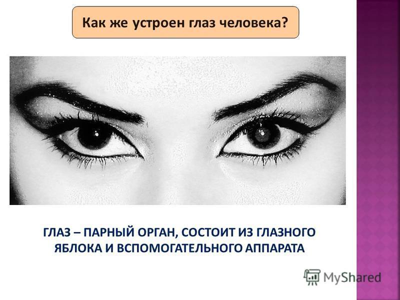 Как же устроен глаз человека? ГЛАЗ – ПАРНЫЙ ОРГАН, СОСТОИТ ИЗ ГЛАЗНОГО ЯБЛОКА И ВСПОМОГАТЕЛЬНОГО АППАРАТА