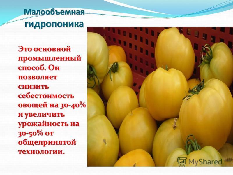 Малообъемная гидрпаника Это основной промышленный способ. Он позволяет снизить себестоимость овощей на 30-40% и увеличить урожайность на 30-50% от общепринятой технологии.