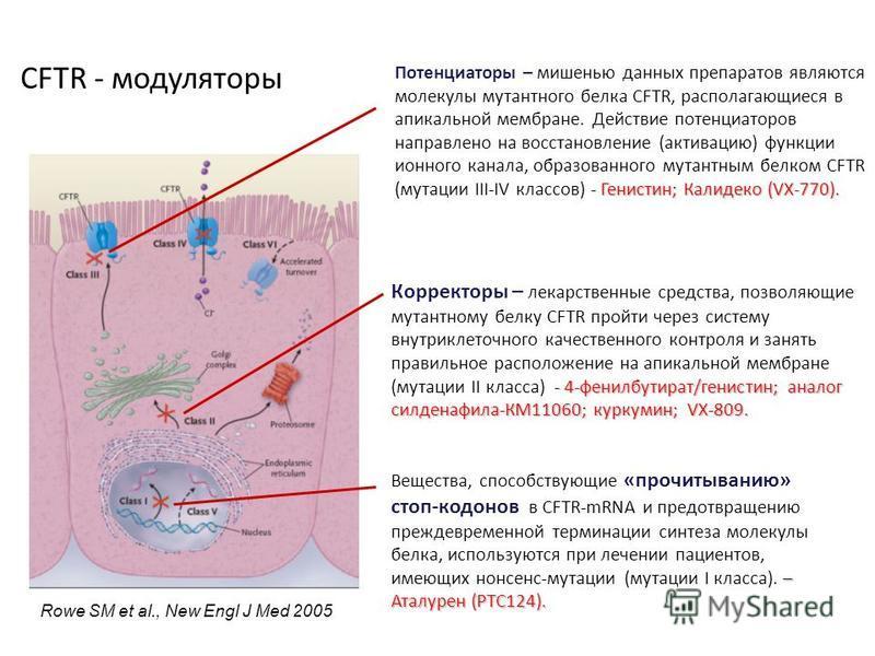 Rowe SM et al., New Engl J Med 2005 - Генистин; Калидеко (VX-770). Потенциаторы – мишенью данных препаратов являются молекулы мутантного белка CFTR, располагающиеся в апикальной мембране. Действие потенциаторов направлено на восстановление (активацию