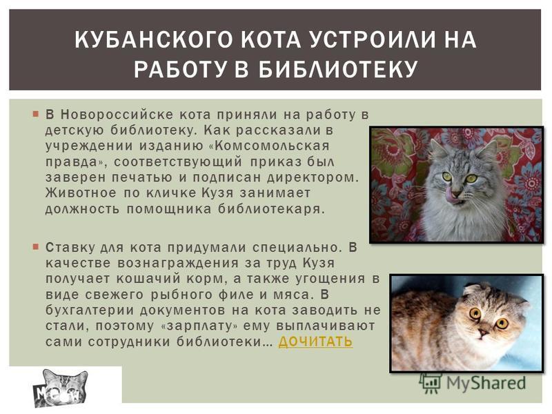 В Новороссийске кота приняли на работу в детскую библиотеку. Как рассказали в учреждении изданию «Комсомольская правда», соответствующий приказ был заверен печатью и подписан директором. Животное по кличке Кузя занимает должность помощника библиотека