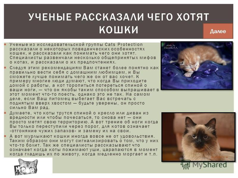 Ученые из исследовательской группы Cats Protection рассказали о некоторых поведенческих особенностях кошек, и рассказали как понимать чего они хотят. Специалисты развенчали несколько общепринятых мифов о котах, и рассказали о их предпочтениях. Следуя