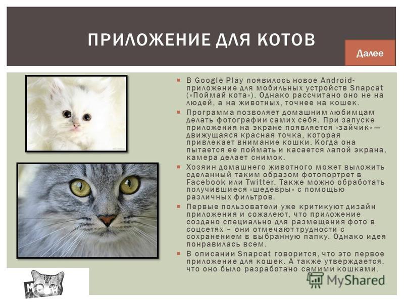 В Google Play появилось новое Android- приложение для мобильных устройств Snapcat («Поймай кота»). Однако рассчитано оно не на людей, а на животных, точнее на кошек. Программа позволяет домашним любимцам делать фотографии самих себя. При запуске прил