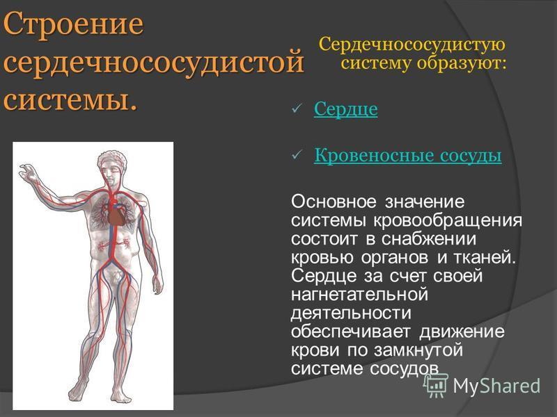 Строение сердечно сосудистой системы. Сердечнососудистую систему образуют: Сердце Кровеносные сосуды Основное значение системы кровообращения состоит в снабжении кровью органов и тканей. Сердце за счет своей нагнетательной деятельности обеспечивает д