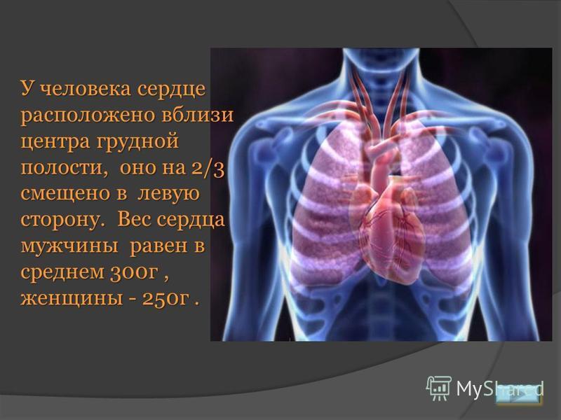 У человека сердце расположено вблизи центра грудной полости, оно на 2/3 смещено в левую сторону. Вес сердца мужчины равен в среднем 300 г, женщины - 250 г.