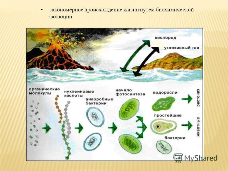 закономерное происхождение жизни путем биохимической эволюции
