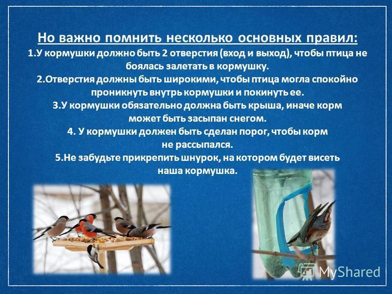 Но важно помнить несколько основных правил: 1. У кормушки должно быть 2 отверстия (вход и выход), чтобы птица не боялась залетать в кормушку. 2. Отверстия должны быть широкими, чтобы птица могла спокойно проникнуть внутрь кормушки и покинуть ее. 3. У