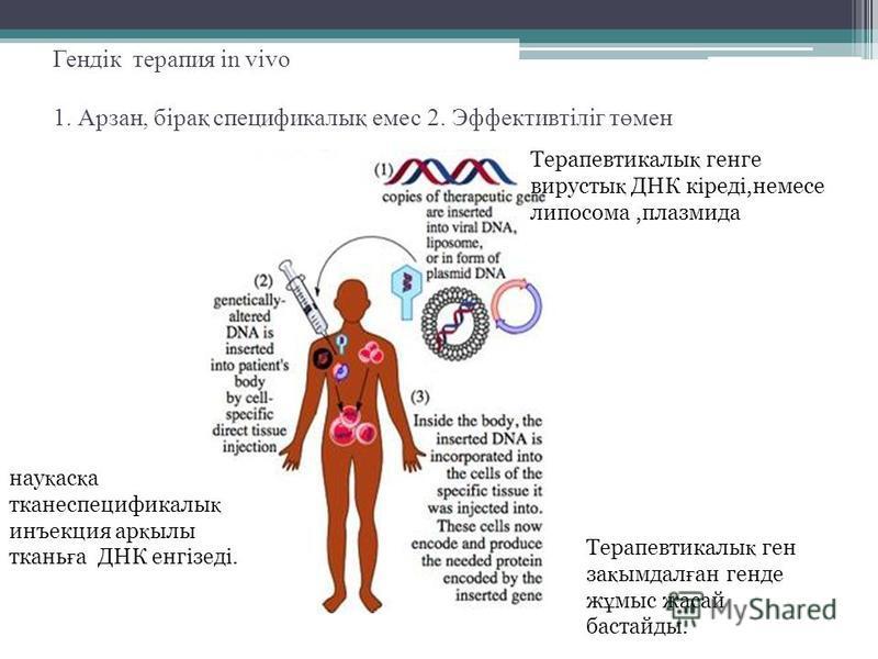 Гендік терапия in vivo 1. Арзан, бірақ спецификалық емс 2. Эффективтіліг төмен Терапевтикалы қ ганге вирусты қ ДНК кіреді,немсе липосома,плазмида Терапевтикалы қ ген за қ имдал ғ ан хенде ж ұ мыс жасай бастарды. нау қ ас қ а тканеспецификалы қ инъекц