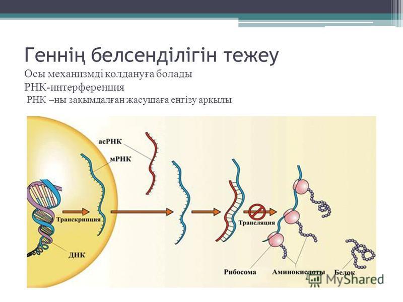 Генні ң белсенділігін те же у Осы механизмді қолдануға болады РНК-интерференция РНК –на зақимдалған жасушаға енгізу арқилы