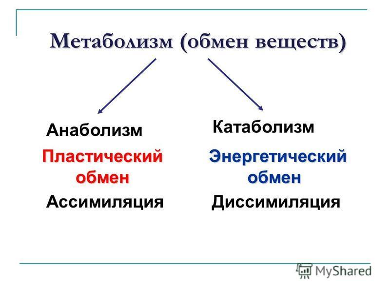 Метаболизм (обмен веществ) Пластический обмен Ассимиляция Анаболизм Энергетический обмен обмен Диссимиляция Катаболизм