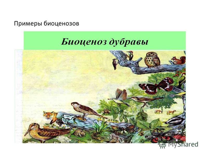 Примеры биоценозов