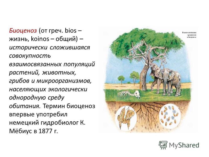 Биоценоз (от греч. bios – жизнь, koinos – общий) – исторически сложившаяся совокупность взаимосвязанных популяций растений, животных, грибов и микроорганизмов, населяющих экологически однородную среду обитания. Термин биоценоз впервые употребил немец