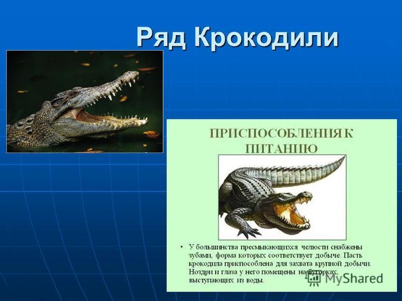 Ряд Крокодили Ряд Крокодили