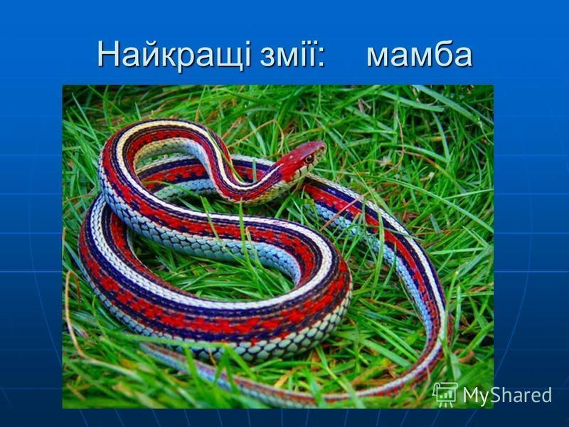 Найкращі змії: мамба
