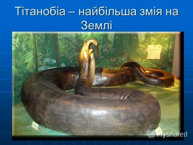 Тітанобіа – найбільша змія на Землі