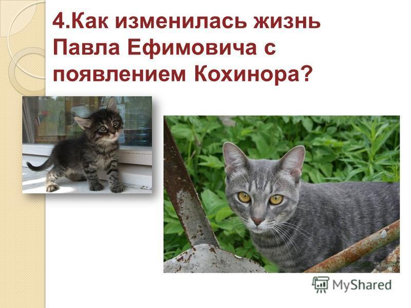 4. Как изменилась жизнь Павла Ефимовича с появлением Кохинора?