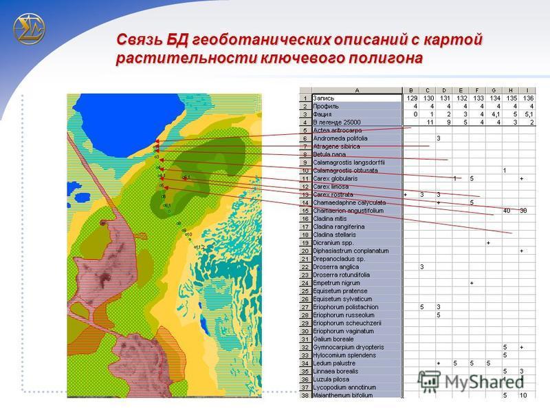 Связь БД геоботанических описаний с картой растительности ключевого полигона