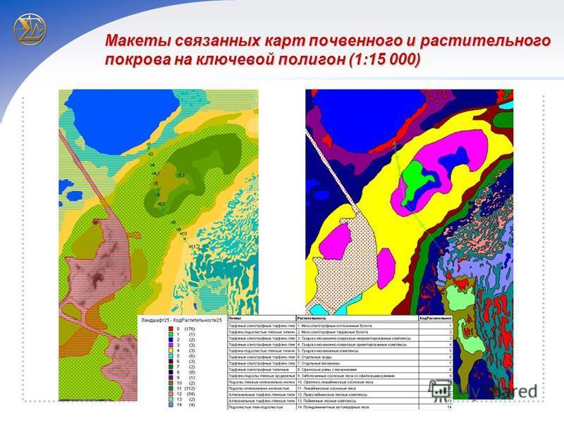 Макеты связанных карт почвенного и растительного покрова на ключевой полигон (1:15 000)