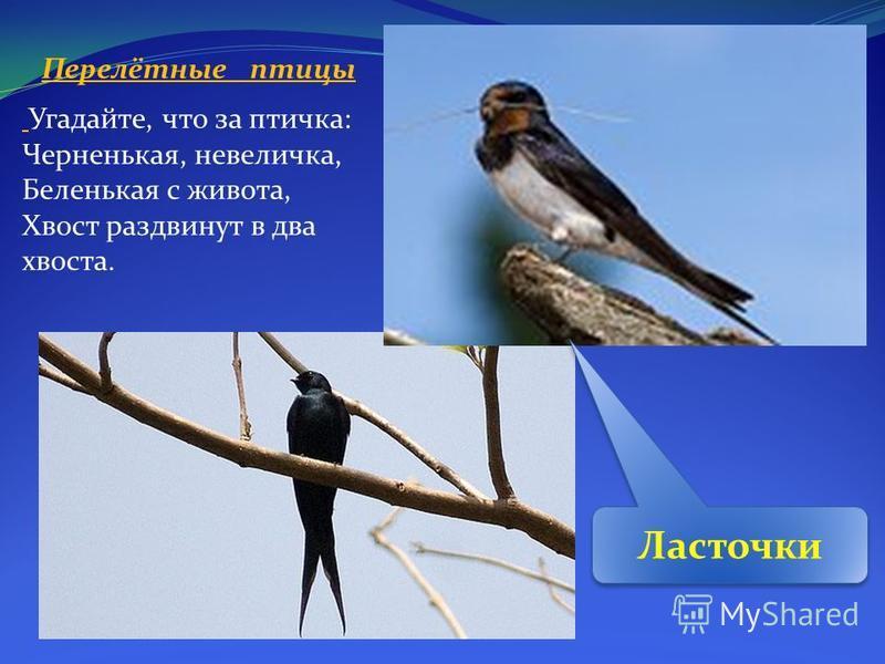 Перелётные птицы Угадайте, что за птичка: Черненькая, невеличка, Беленькая с живота, Хвост раздвинут в два хвоста. Ласточки