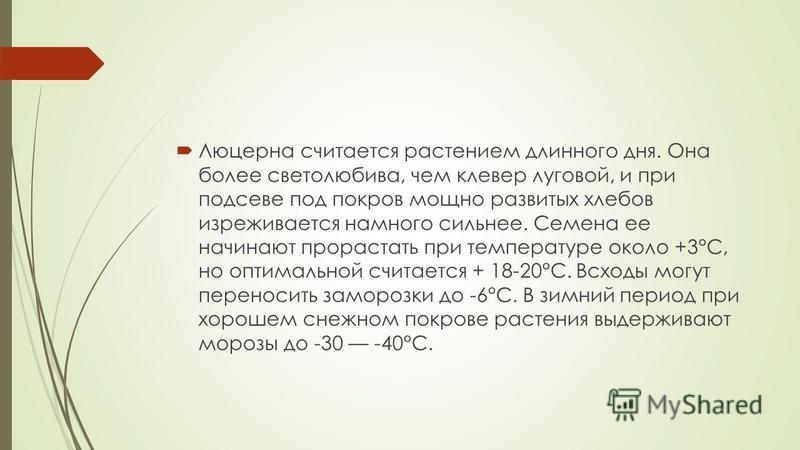 Люцерна считается растением длинного дня. Она более светолюбива, чем клевер луговой, и при подсеве под покров мощно развитых хлебов изнеживается намного сильнее. Семена ее начинают прорастать при температуре около +3°С, но оптимальной считается + 18-