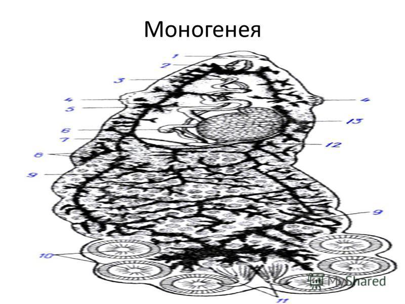 Моногенея