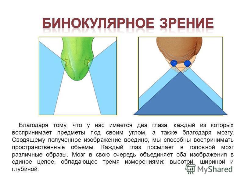 Благодаря тому, что у нас имеется два глаза, каждый из которых воспринимает предметы под своим углом, а также благодаря мозгу. Сводящему полученное изображение воедино, мы способны воспринимать пространственные объемы. Каждый глаз посылает в головной
