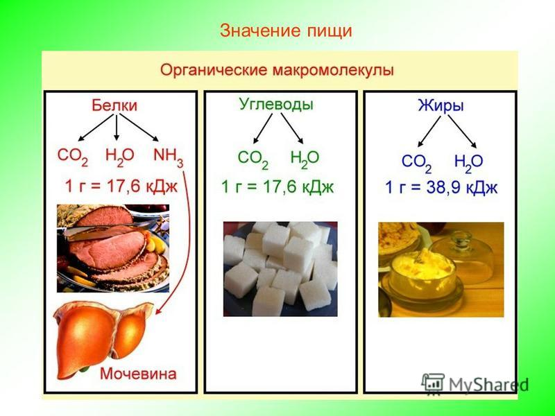Значение пищи