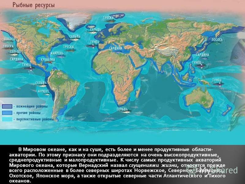 В Мировом океане, как и на суше, есть более и менее продуктивные области- акватории. По этому признаку они подразделяются на очень высокопродуктивные, средне продуктивные и малопродуктивные. К числу самых продуктивных акваторий Мирового океана, котор