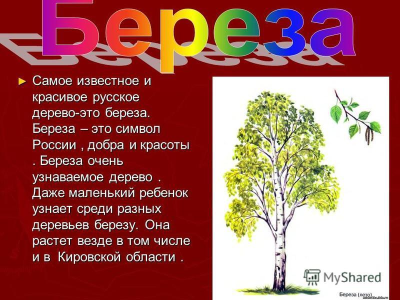 Самое известное и красивое русское дерево-это береза. Береза – это символ России, добра и красоты. Береза очень узнаваемое дерево. Даже маленький ребенок узнает среди разных деревьев березу. Она растет везде в том числе и в Кировской области. Самое и