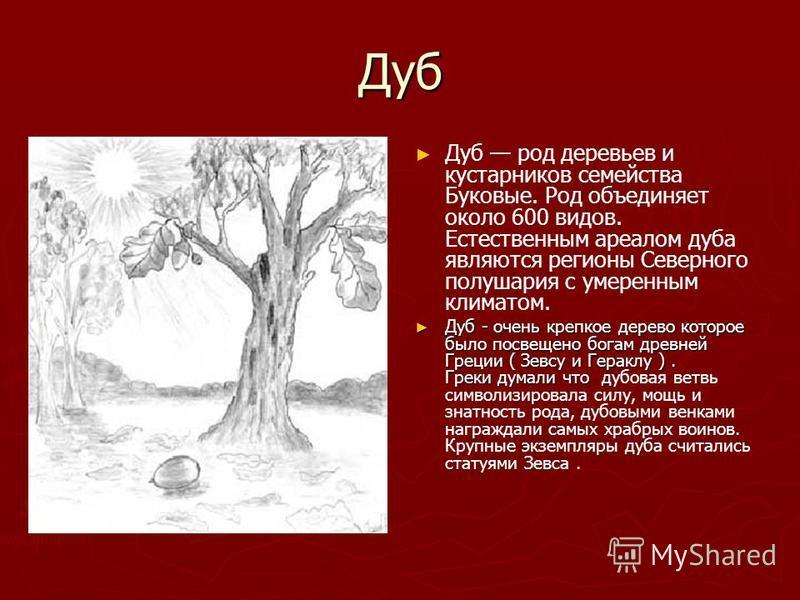Дуб Дуб род деревьев и кустарников семейства Буковые. Род объединяет около 600 видов. Естественным ареалом дуба являются регионы Северного полушария с умеренным климатом. Дуб - очень крепкое дерево которое было посвящено богам древней Греции ( Зевсу