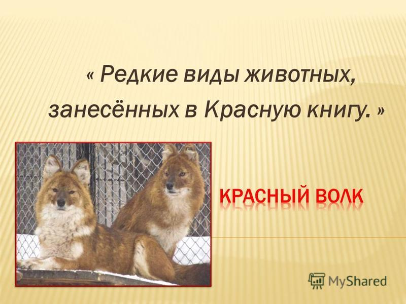 « Редкие виды животных, занесённых в Красную книгу. »