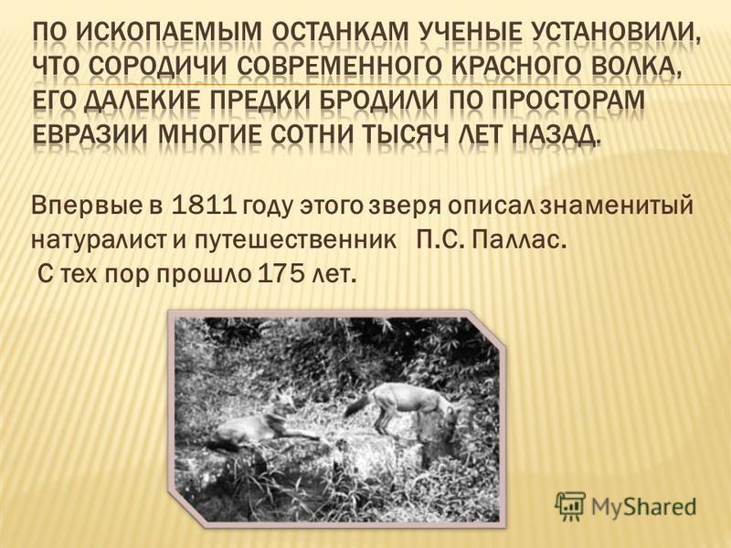 Впервые в 1811 году этого зверя описал знаменитый натуралист и путешественник П.С. Паллас. С тех пор прошло 175 лет.