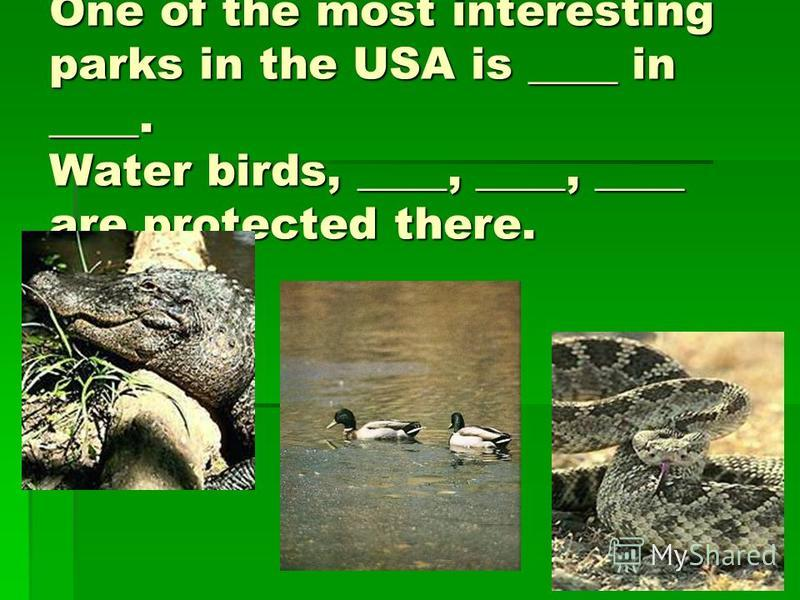 One of the most interesting parks in the USA is ____ in ____. Water birds, ____, ____, ____ are protected there.