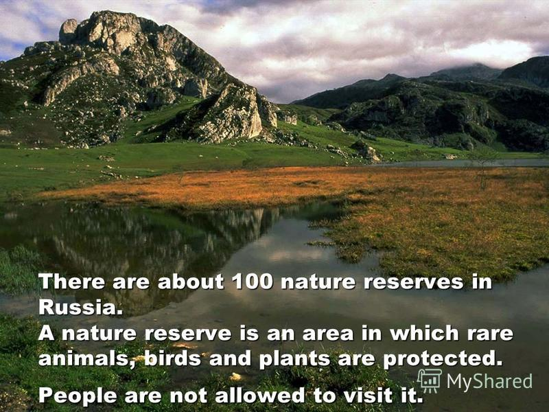 There are about 100 nature reserves in Russia. A nature reserve is an area in which rare animals, birds and plants are protected. People are not allowed to visit it.