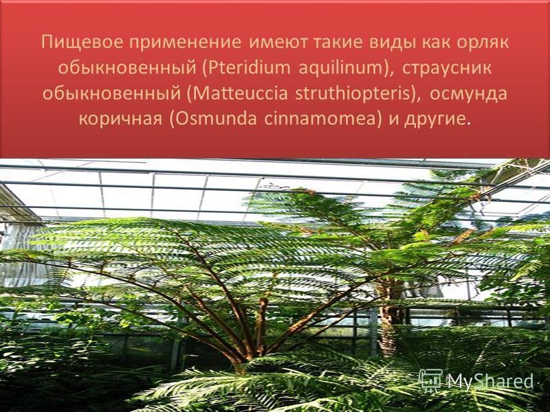 Пищевое применение имеют такие виды как орляк обыкновенный (Pteridium aquilinum), страусник обыкновенный (Matteuccia struthiopteris), осмунда коричная (Osmunda cinnamomea) и другие.