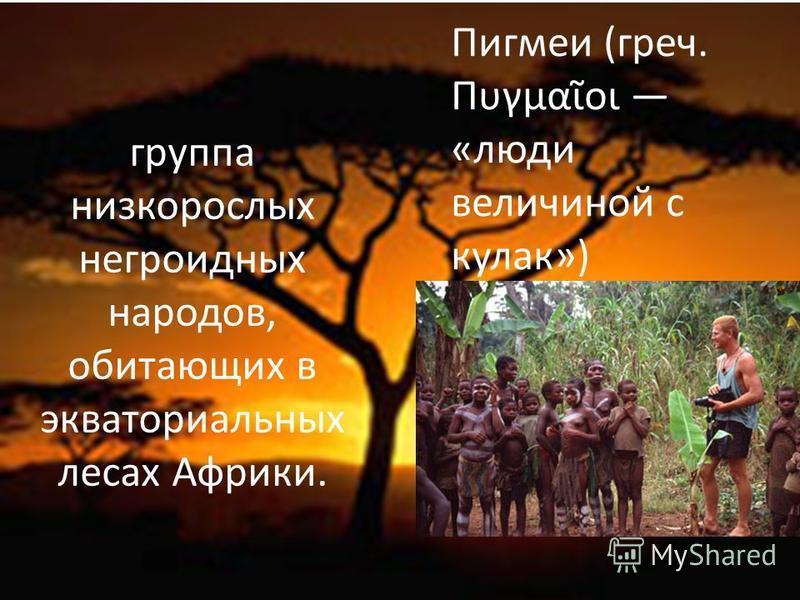 группа низкорослых негроидных народов, обитающих в экваториальных лесах Африки. Пигмеи (греч. Πυγμαοι «люди величиной с кулак»)