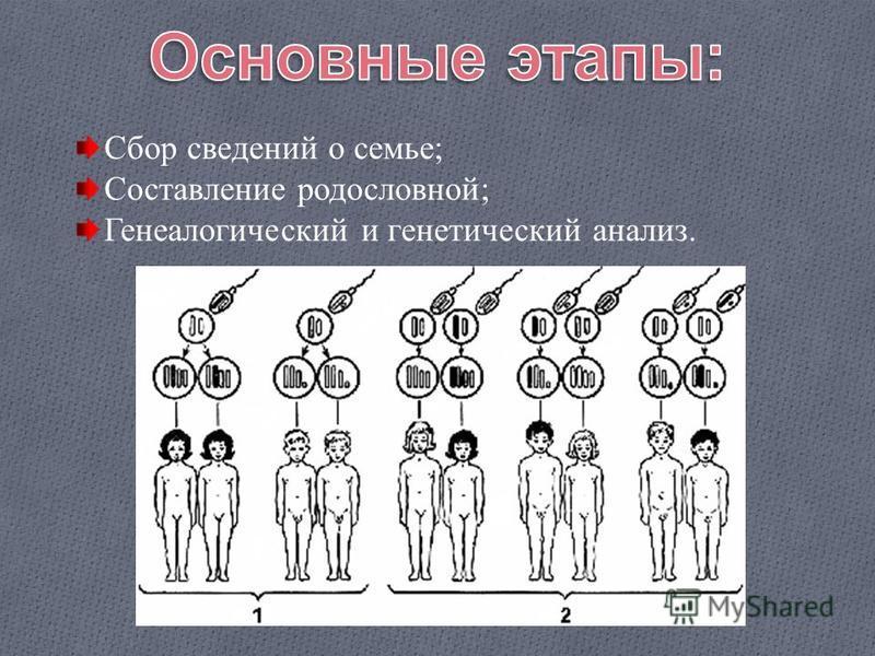 Сбор сведений о семье; Составление родословной; Генеалогический и генетический анализ.