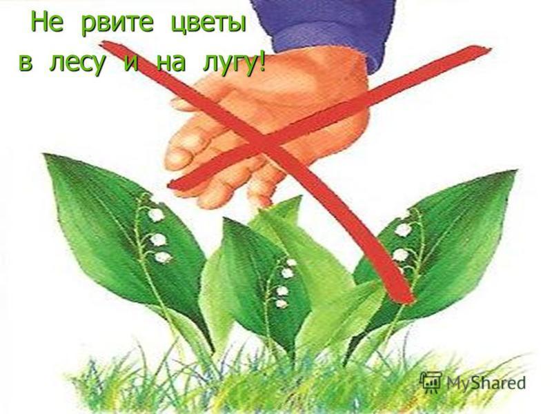 Не рвите цветы в лесу и на лугу! в лесу и на лугу!