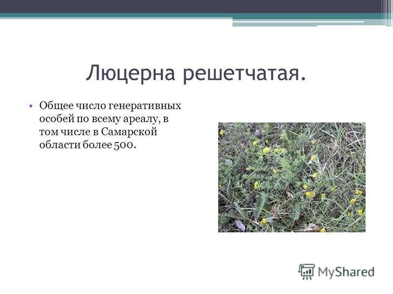 Люцерна решетчатая. Общее число генеративных особей по всему ареалу, в том числе в Самарской области более 500.