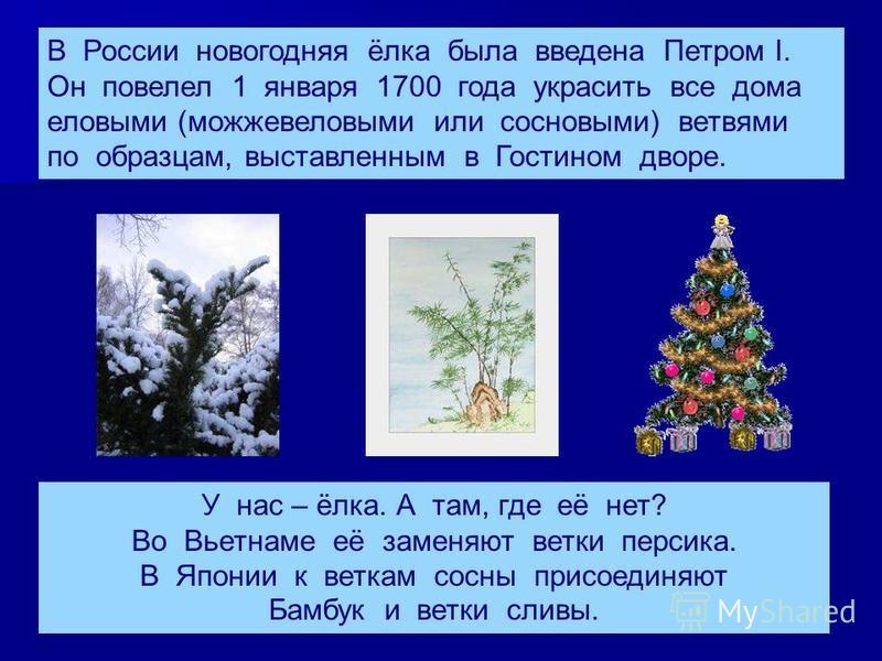 В России новогодняя ёлка была введена Петром I. Он повелел 1 января 1700 года украсить все дома еловыми (можжевеловыми или сосновыми) ветвями по образцам, выставленным в Гостином дворе. У нас – ёлка. А там, где её нет? Во Вьетнаме её заменяют ветки п