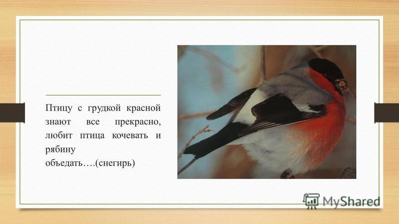 Птицу с грудкой красной знают все прекрасно, любит птица кочевать и рябину объедать….(снегирь)
