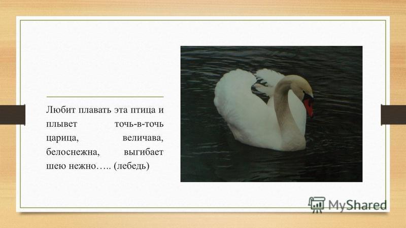 Любит плавать эта птица и плывет точь-в-точь царица, величава, белоснежна, выгибает шею нежно….. (лебедь)