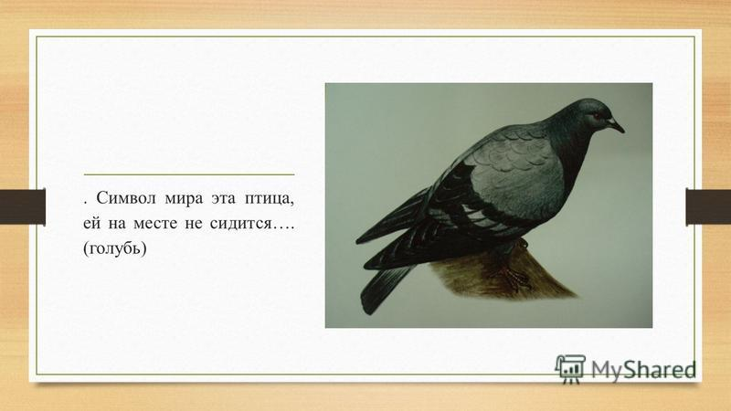 . Символ мира эта птица, ей на месте не сидится…. (голубь)