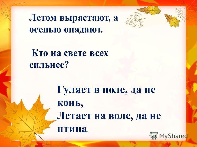 Летом вырастают, а осенью опадают. Кто на свете всех сильнее? Гуляет в поле, да не конь, Летает на воле, да не птица.