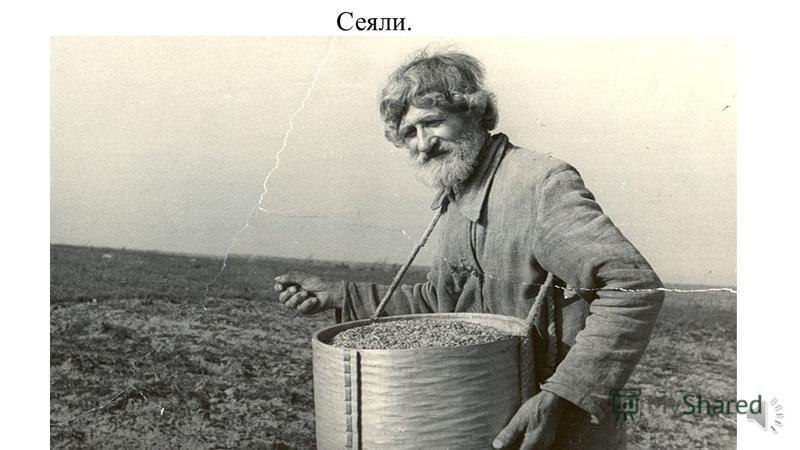 История выращивания крупы. Так пахали на Руси и разрыхляли