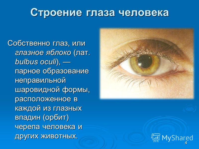 Строение глаза человека Собственно глаз, или глазное яблоко (лат. bulbus oculi), парное образование неправильной шаровидной формы, расположенное в каждой из глазных впадин (орбит) черепа человека и других животных. 4