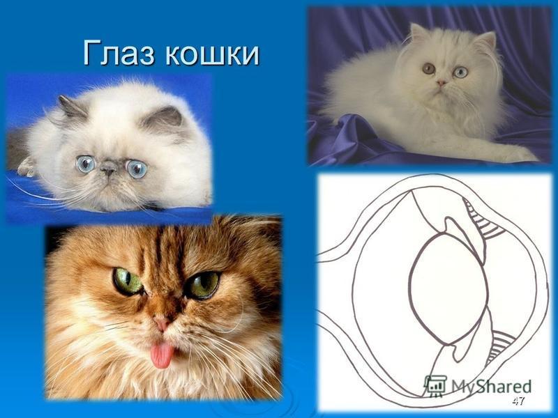 Глаз кошки 47