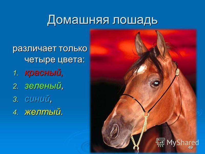 Домашняя лошадь различает только четыре цвета: 1. красный, 2. зеленый, 3. синий, 4. желтый. 49