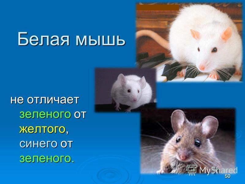 Белая мышь не отличает зеленого от желтого, синего от зеленого. 50